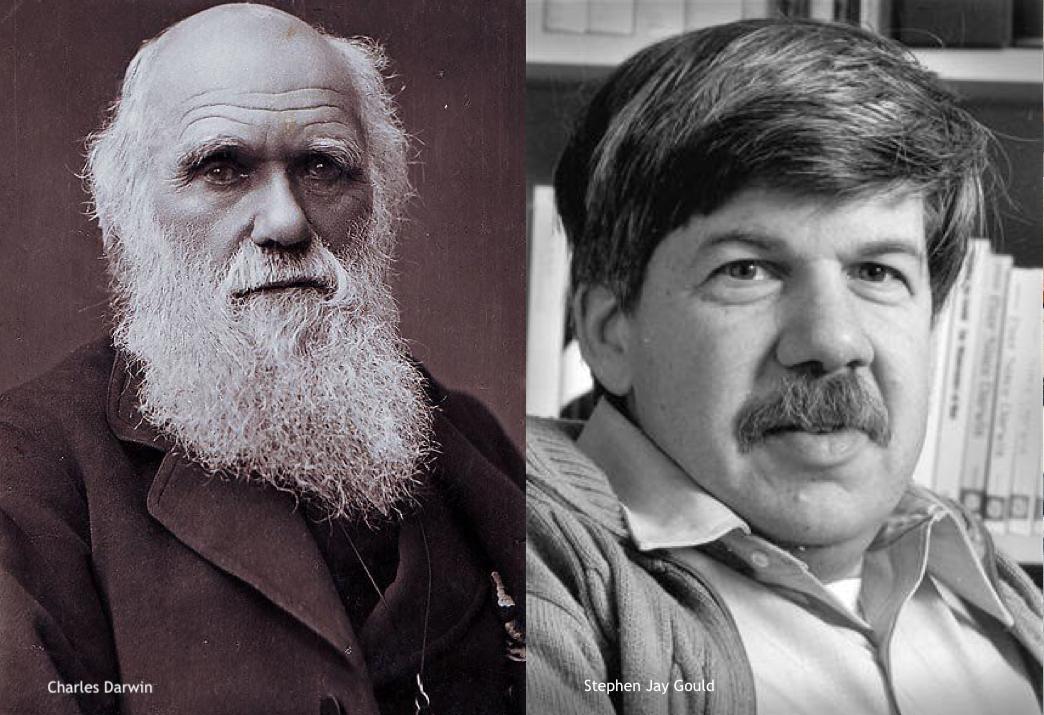 Darwin-Gould